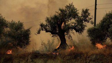 """صورة محافظ حمص لـ""""الوطن"""": 376 عائلة تضررت نتيجة الحرائق"""