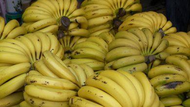 """صورة محمح لـ""""الوطن"""": قلة الطلب يخفض سعر الموز.. المستورد يخسر!"""