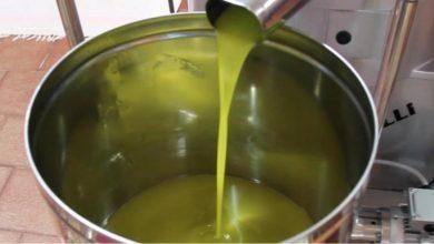 صورة تصدير زيت الزيتون للعراق ضعيف عبر منفذ البوكمال