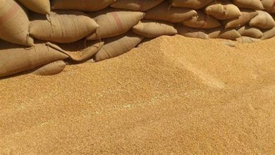 صورة الاحتلال الأمريكي يواصل سرقة القمح السوري ويخرج 38 شاحنة من ريف الحسكة إلى العراق