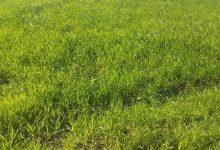 صورة 79 بالمئة نسبة تنفيذ خطة زراعة القمح فيالقنيطرة