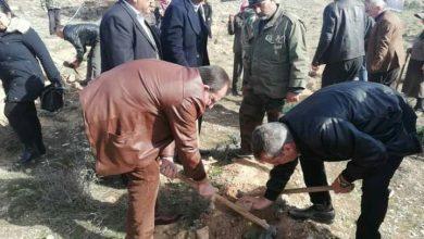 صورة تشجير 20 دونم بنحو 800 غرسة حراجية في جبال الشومرية بريف حمص الشرقي