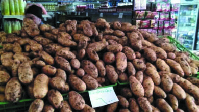 صورة السورية للتجارة تعزز صالاتها بكميات إضافية من البطاطا وبنفس السعر
