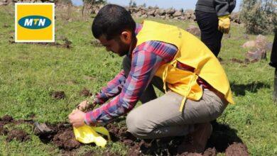 """صورة شركة MTN سوريا ترعى ختام موسم التشجير ضمن حملة """"الأيادي الخضراء"""" لإعادة الحياة للغابات السورية"""