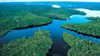 صورة غابات الأمازون لم تعد قادرة على مساعدة الكوكب