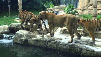 صورة إعادة افتتاح حديقة الحيوانات في العدوي بدمشق و5 آلاف زائر في أيام العطل