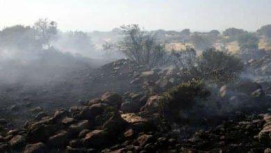صورة حريق يلتهم نحو 75 دونماً في حراج محمية الضمنة على طريق قنوات