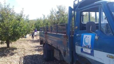 صورة تفاح اللاذقية.. من أرض المزارع إلى السورية للتجارة