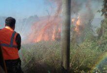 صورة ماس كهربائي يتسبب بحريق أشجار حراجية على طريق شين _ الصويري بريف حمص