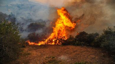 صورة النيران تلتهم 25 دونماً من الزيتون في ريف اللاذقية