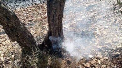 صورة حريق يلتهم مساحات واسعة من الأراضي وأشجار الزيتون بطرطوس