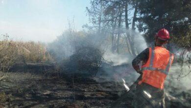 صورة إخماد حريق بأشجار مثمرة على امتداد 20 دونما في أراضي رباح بريف حمص الغربي